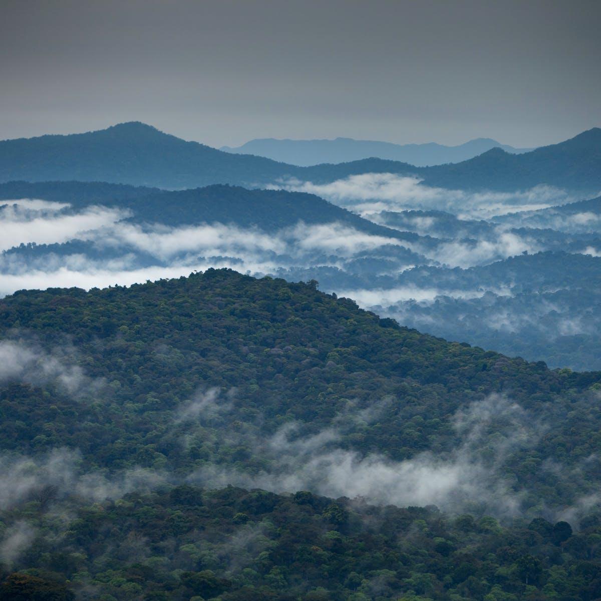 Ethiopian coffee forest