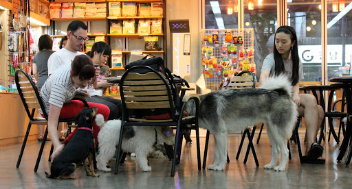 pet friendly cafe shanghai