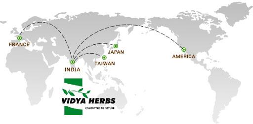vidya global