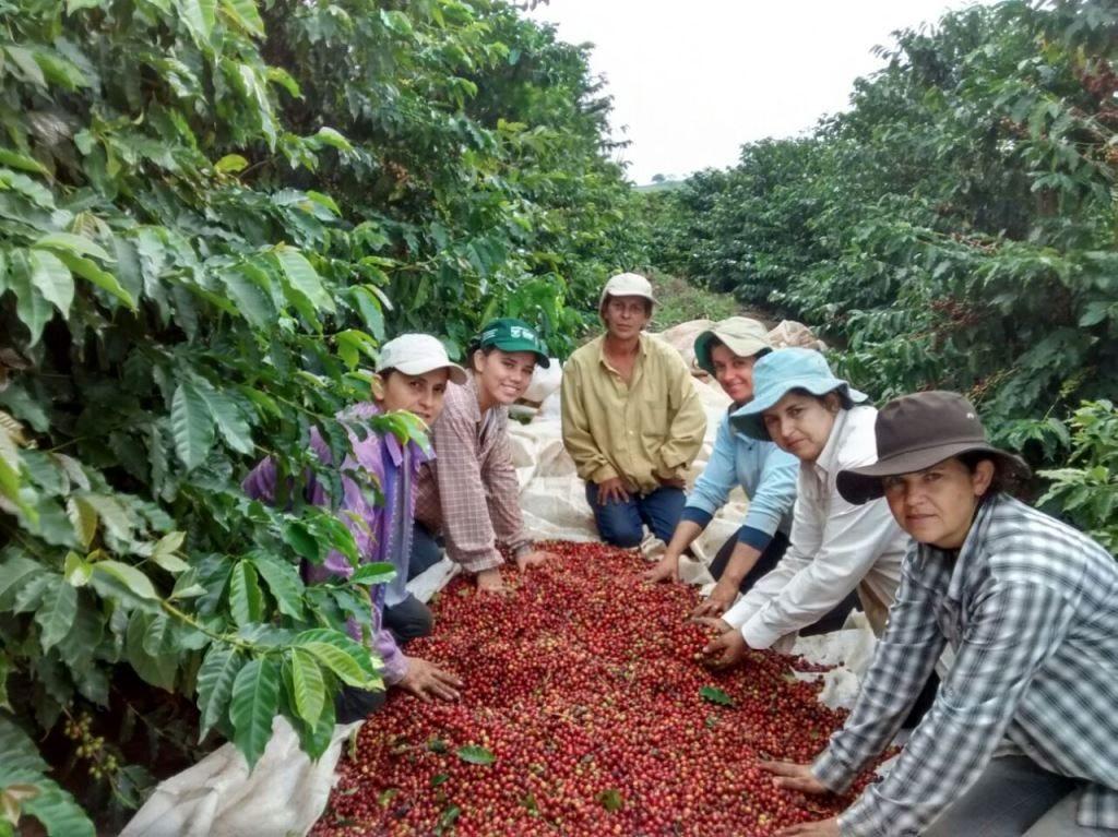 women coffee farmers